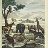 Les Quadrupèdes: le Singe, le Lion, l'Ane, le Cheval, la Vache, l'Elephant, le Chameau, la Girafe, le Tigre, le Loup, le Renard, le Castor, le Chat, le Chien, le Crocodile.