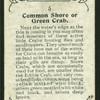 Common shore crab.
