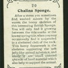 Chalina sponge.