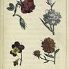 Les Fleurs: 1. la Rose. 2. l'OEillet. 3. la Pensée. 4. la Reine-margueritte.