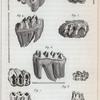 [Les dents de l'éléphant et des ancien hippopotames]. Fig. 1-8.
