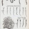 """Expériences au sujet de la génération.]  """" les expériences de M. Needham sur la semence d'une espèce de sèche appelée calmar."""" Fig. 1-25"""