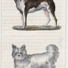 1. Le Dogue de forte race. 2. Le Chien de Sibérie.