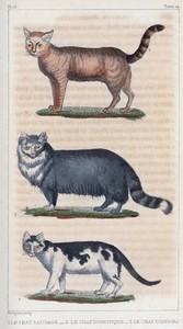 1. Le Chat sauvage. 2. Le Chat domestique. 3. Le Chat d'Angora.