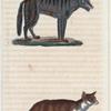 1. Le Loup du Méxique. 2. Le Renard.