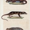1. Le Blaireau. 2. La Loutre. 3. La Loutre de la Guyane.