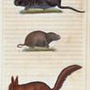 1. L'Écureuil. 2. Le Rat d'eau. 3. Le Campagnol.
