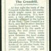 Crossbill.