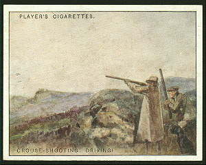 Grouse-shooting (driving).