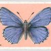 Adonis blue.