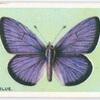 Mazarine blue.