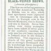 Black-veined brown.