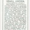 Small copper.