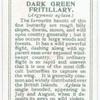 Dark green fritillary.