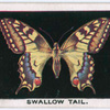 Swallow-tail.
