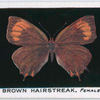 Brown hairstreak, female.
