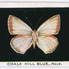 Chalk hill blue, male.