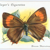 Brown hairstreak.