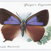 Purple hairstreak.