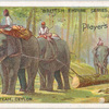 An elephant team, Ceylon.