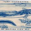Conger eel.