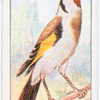 The goldfinch.