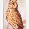 The long-eared owl.