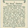 The horse chestnut.