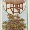 The oak.