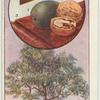 The walnut.