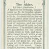 The alder.