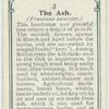[The ash.]