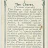 The cherry.