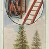 The spruce fir.