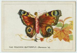 The peacock butterfly.