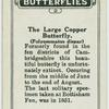 The large copper butterfly.