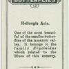 Helicopis acis.