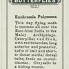 Euchromia polymena.