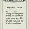 Euptychia brixus.