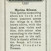 Myrina silenus.