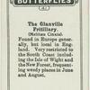 The glanville fritillary.