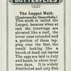 The lappet moth.