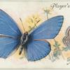 Great Britain - adonis blue.