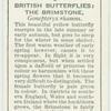 Great Britain - brimstone.