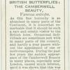 Great Britain - camberwell beauty.