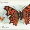 Great Britain - comma.