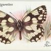 Great Britain - marbled white.