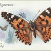 Great Britain - painted lady.