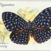 Central & South America - click butterfly.
