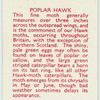 Popular Hawk.